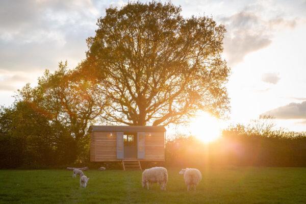 Shepherd Hut with Sheep