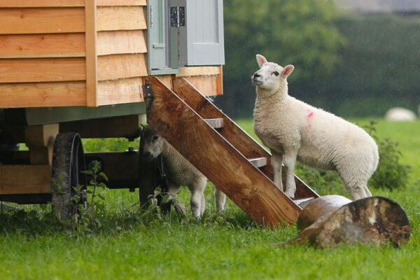 Shepherd Hut Steps
